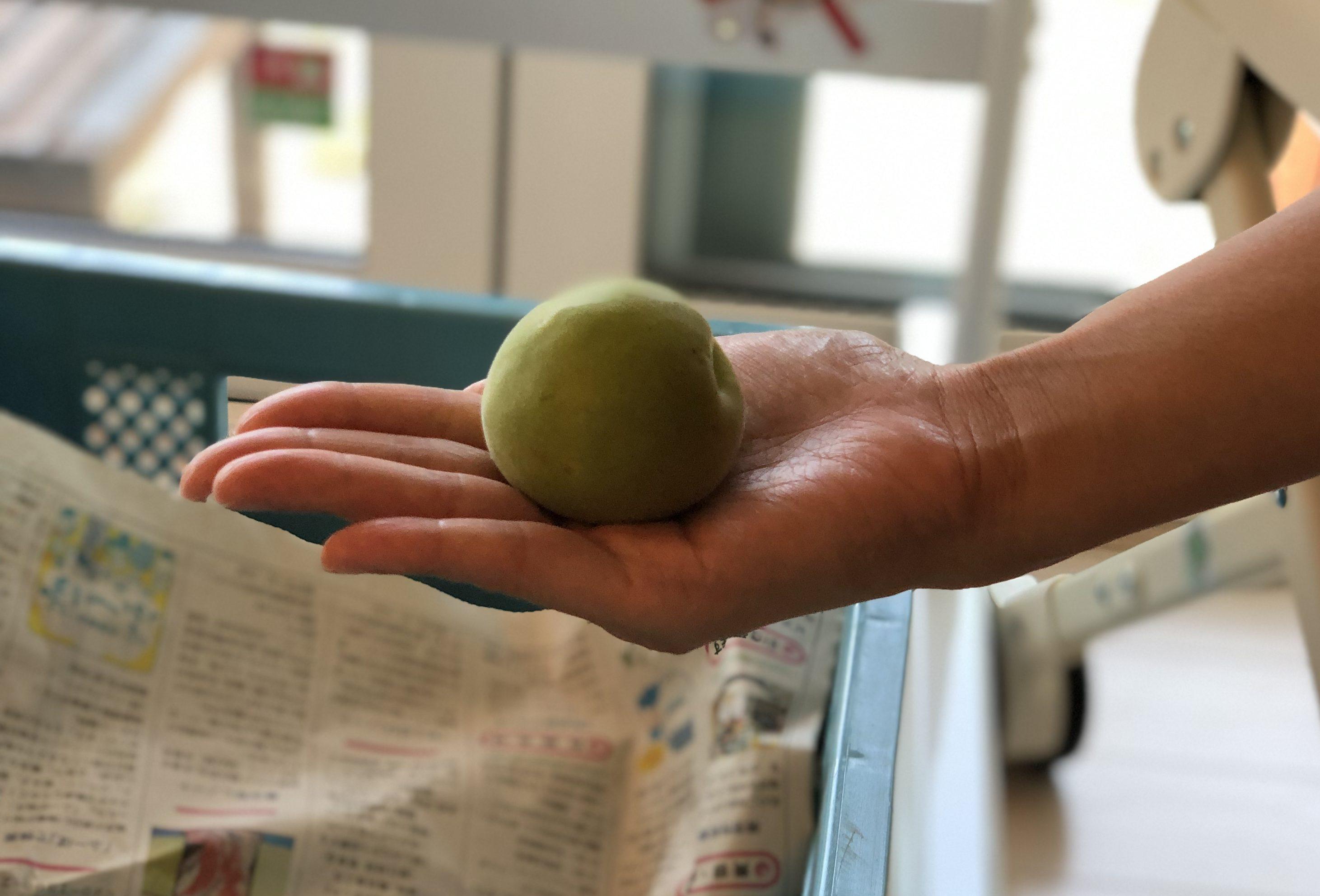 若狭の剣先梅を使った「ゆるゆる梅しごと・ほんのり梅養生」開催しました。